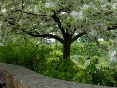 Prydbuske og træer