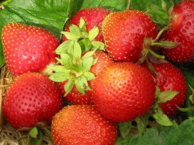 Lav dit jordbærbed nu