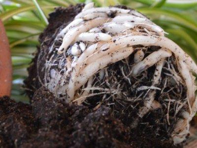 Stueplanter pottes op
