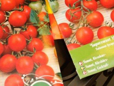 Så er det tid at så tomater